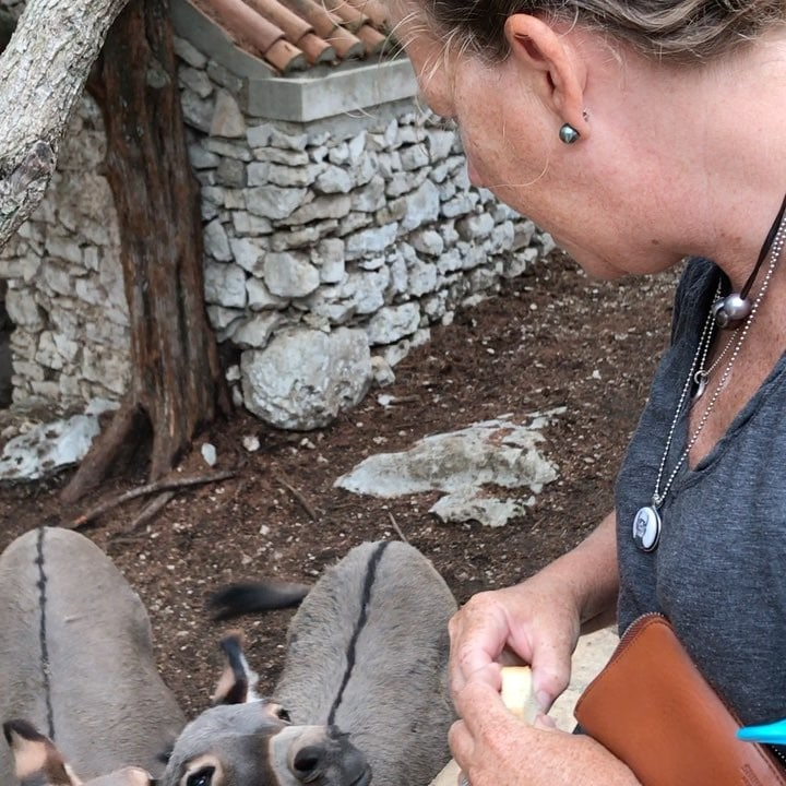 When you see donkeys at the monestary in @mljetnationalpark you must feed and talk to them for luck #weeklydish #stephaniesdish #crotia #sailing