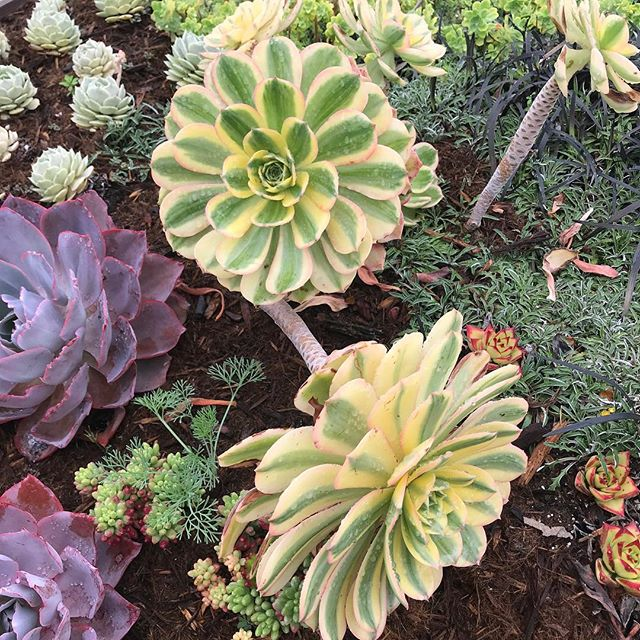 The succulents in the gardens @gettymuseum were spectacular! #santamonica #stephaniesdish #weeklydish #succulents #gettygardens