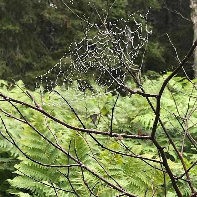 Beautiful spider web with rain mist on my run this AM. So cool. #passiroad #passiroadpictures #burntsidelake #running #run #tc_mn #tc10mile #spiderwebs #stephaniesdish